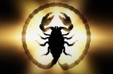Scorpion_BakLit-01b